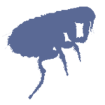 Eliminar pulgas madrid