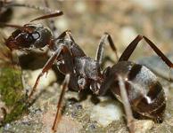 Eliminar hormigas madrid
