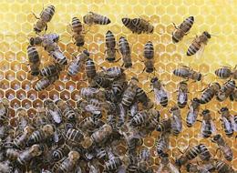 Eliminar plagas abejas Madrid