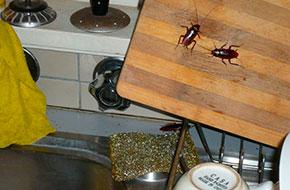 Control cucarachas Madrid