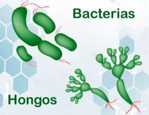 Eliminar hongos Madrid - Eliminar bacterias Madrid