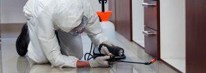 Empresa control plagas madrid