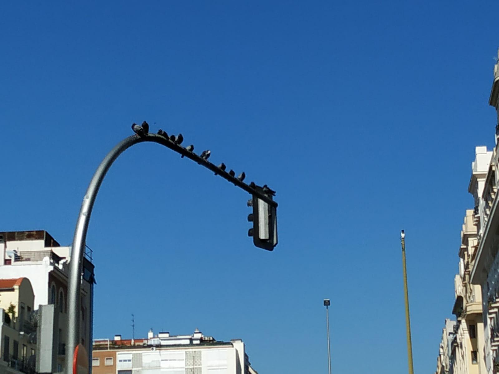 las-palomas-son una-plaga